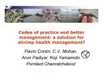 Codes of practice and better management: A solution for shrimp health management?