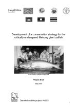 Development of a conservation strategy for the critically endangered Mekong giant catfish: Project brief