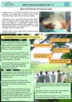Better practice guidelines: Spawn production of common carp