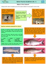 Better-practice guidelines: What is fish culture?