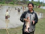 Harvesting a communal culture-based fishery in Thong Van, Vietnam.
