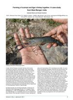 Farming of scampi and tiger shrimp together: A case study from West Bengal, India