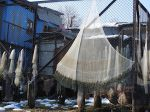 Cast nets: The dominant active fishing gear in the Kashmir Valley