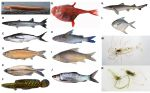 Integrated taxonomy, conservation and sustainable development: Multiple facets of biodiversity